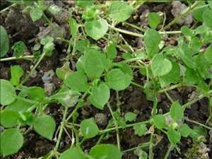 9-2023-buddha-teas-etsy-bay-berry-bliss-wild-carrot-herbals-chagrin-valley-soap-salve-news-daily.jpg