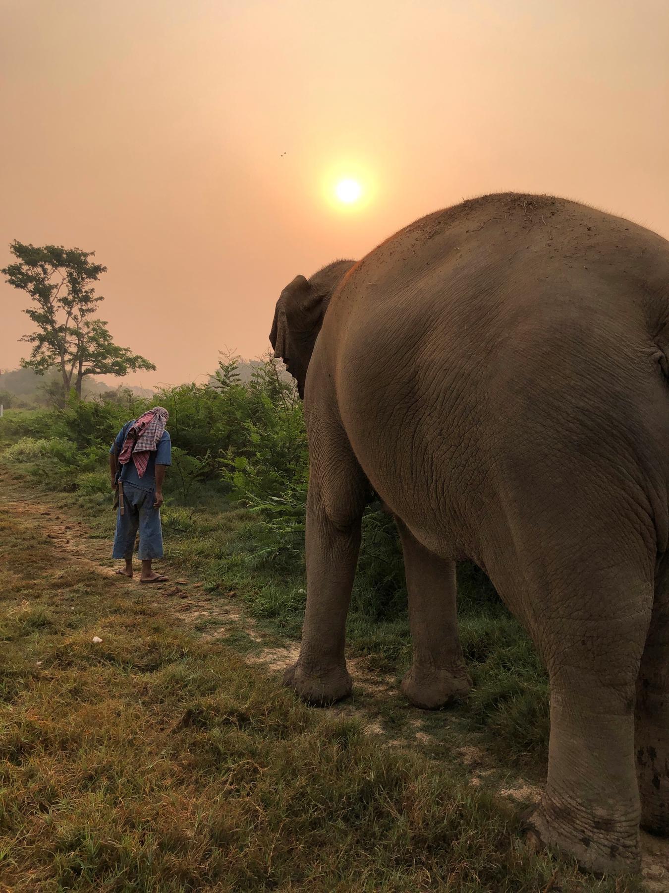 Walking-with-Elephants.jpg
